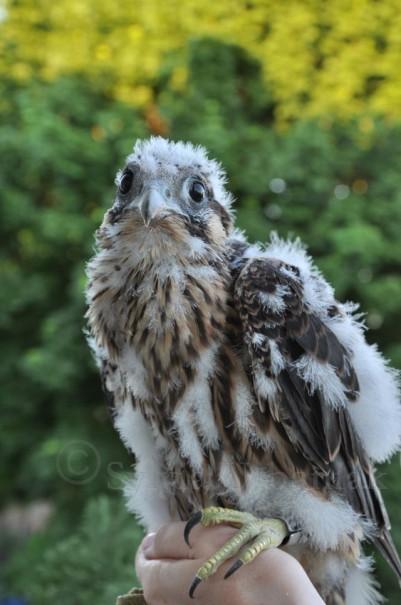 junger vogel mit weiß schwarzem kopf