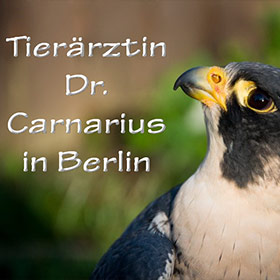 Tierärztin Dr. Carnarius in Berlin